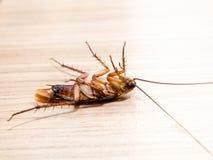 Τα μικρά ζώα κατσαρίδων αποσπούν μια ενόχληση προκαλούν της ασθένειας Στοκ εικόνες με δικαίωμα ελεύθερης χρήσης