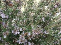 Τα μικρά λουλούδια αυξάνονται στοκ φωτογραφίες