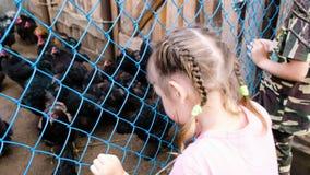 Τα μικρά παιδιά εξετάζουν τις κότες και τους κόκκορες σε ένα κλουβί στο αγρόκτημα απόθεμα βίντεο
