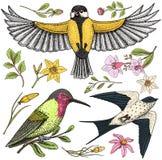 Τα μικρά πουλιά της σιταποθήκης καταπίνουν ή martlet και parus ή titmouse, καστανοκοκκινωπός daffodil και ορχιδέα με τα φύλλα και διανυσματική απεικόνιση