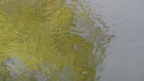 Τα μικρά ψάρια κολυμπούν ενάντια στο ρεύμα στον ποταμό φιλμ μικρού μήκους
