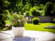 Τα μικρά pansies στον κήπο Στοκ φωτογραφία με δικαίωμα ελεύθερης χρήσης