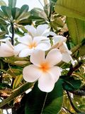 Τα μοναδικά όμορφα λουλούδια στοκ φωτογραφίες με δικαίωμα ελεύθερης χρήσης