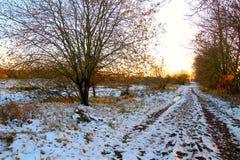 τα μούρα αυξήθηκαν άγρια περιοχές Στοκ Φωτογραφία