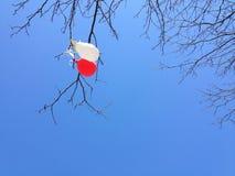 Τα μπαλόνια κρεμούν κολλημένος τους κλάδους ενός δέντρου Στοκ εικόνες με δικαίωμα ελεύθερης χρήσης