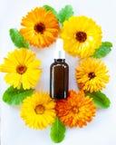 Τα μπουκάλια με το πετρέλαιο calendula λουλουδιών, επίπεδο βάζουν, βιο, οργανικός, εθνικός στοκ φωτογραφία με δικαίωμα ελεύθερης χρήσης