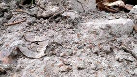 Τα μυρμήγκια αποικιών είναι besy απόθεμα βίντεο