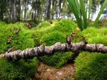 τα μυρμήγκια πηγαίνουν σχ&om Στοκ φωτογραφία με δικαίωμα ελεύθερης χρήσης