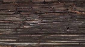 Τα μυρμήγκια τοποθετούνται στο ξύλο - βάλτε φωτιά στα μυρμήγκια που σέρνονται στο ξύλινο παλαιό σπίτι φιλμ μικρού μήκους