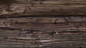 Τα μυρμήγκια τοποθετούνται στο ξύλο - βάλτε φωτιά στα μυρμήγκια που σέρνονται στο ξύλινο παλαιό σπίτι απόθεμα βίντεο