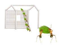 Τα μυρμήγκια χτίζουν τα σπίτια Στοκ Εικόνες