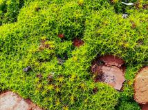 Τα νέα πράσινα καλλιεργούν την άνοιξη στοκ εικόνες