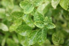 Τα νέα πράσινα καλλιεργούν την άνοιξη στοκ φωτογραφίες με δικαίωμα ελεύθερης χρήσης