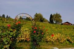 Τα ναυπηγεία και τα πεζούλια Lavaux κρασιού στη παγκόσμια κληρονομιά της ΟΥΝΕΣΚΟ στοκ εικόνες