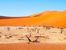 Τα νεκρά δέντρα αγκαθιών καμηλών σε Deadvlei ξεραίνουν το τηγάνι στη μέση των κόκκινων αμμόλοφων ερήμων Namib, κοντά σε Sossusvle Στοκ εικόνες με δικαίωμα ελεύθερης χρήσης