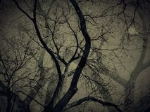 Τα νεκρά δέντρα με τις σκιές στο εκλεκτής ποιότητας ύφος βλέπουν - σύντομο χρονογράφημα και grunge τεχνικές εικόνας Στοκ Φωτογραφίες