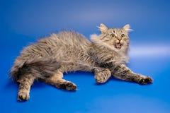 τα νύχια γατών αφήνουν έξω Σι&b Στοκ εικόνα με δικαίωμα ελεύθερης χρήσης