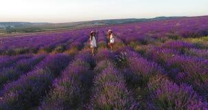 Τα ξένοιαστα κορίτσια πηγαίνουν σε ένα πικ-νίκ στον τομέα lavender Εναέριος βλαστός απόθεμα βίντεο