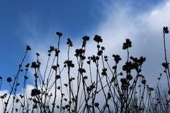 Τα ξηρά λουλούδια, ενθυμίζοντα του immortelle, συναντούν το ελατήριο Στοκ Εικόνες