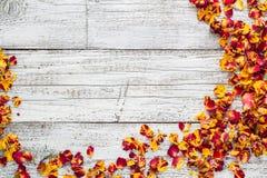 Τα ξηρά πέταλα αυξήθηκαν σε ένα άσπρο ξύλινο υπόβαθρο Στοκ Εικόνες