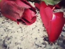 Τα ξηρά τριαντάφυλλα και αυξήθηκαν πέταλα σε ένα μαρμάρινο υπόβαθρο Στοκ Εικόνες