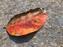 Τα ξηρά φύλλα, πορτοκαλιά φύλλα μαραίνονται, φύλλα, χειμώνας, παγκόσμια αύξηση της θερμοκρασίας λόγω του φαινομένου του θερμοκηπί στοκ φωτογραφία
