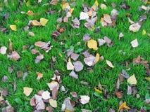 Τα ξηρά φύλλα φθινοπώρου σε μια πράσινη χλόη κλείνουν επάνω Στοκ Εικόνες