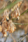 Τα ξηρά φύλλα στους κλάδους Μαρασμός της φύσης Στοκ φωτογραφία με δικαίωμα ελεύθερης χρήσης