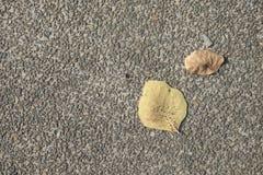 Τα ξηρά φύλλα στο μάρμαρο δίνουν το πάτωμα Στοκ εικόνα με δικαίωμα ελεύθερης χρήσης