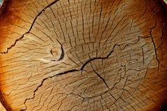 Τα ξύλα ξυλείας κόβουν το σχέδιο και τα δαχτυλίδια Στοκ φωτογραφία με δικαίωμα ελεύθερης χρήσης