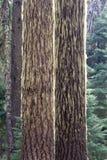 Τα ξύλα, Όρεγκον στοκ φωτογραφία με δικαίωμα ελεύθερης χρήσης