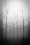 Τα ξύλα λευκών Στοκ Εικόνες