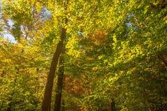 Τα ξύλα Στοκ εικόνες με δικαίωμα ελεύθερης χρήσης