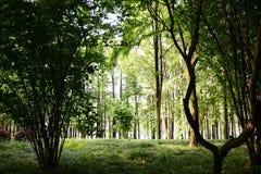Τα ξύλα Στοκ φωτογραφία με δικαίωμα ελεύθερης χρήσης