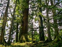 Τα ξύλινα ιαπωνικά Στοκ Εικόνα