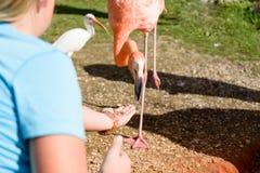 Τα οικογενειακά ταΐζοντας πουλιά στο πάρκο στοκ εικόνα