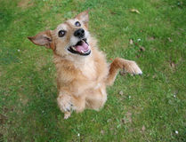 τα οπίσθια πόδια σκυλιών χ& Στοκ εικόνες με δικαίωμα ελεύθερης χρήσης