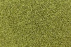 Τα οργανικά ξηρά Moringa ή Sahjan (Moringa oleifera) φύλλα στο τσάι κόβουν το μέγεθος Στοκ φωτογραφία με δικαίωμα ελεύθερης χρήσης