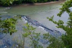 Τα ορμητικά σημεία ποταμού ενός ποταμού βουνών Στοκ φωτογραφία με δικαίωμα ελεύθερης χρήσης
