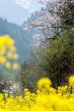 Τα λουλούδια λάχανων Στοκ Εικόνες