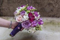 Τα λουλούδια αναπηδούν τη φύση χρωμάτων Στοκ Εικόνες