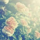 τα λουλούδια ανασκόπησ&et Στοκ εικόνες με δικαίωμα ελεύθερης χρήσης