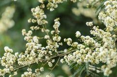 τα λουλούδια ανασκόπησ&et Στοκ εικόνα με δικαίωμα ελεύθερης χρήσης
