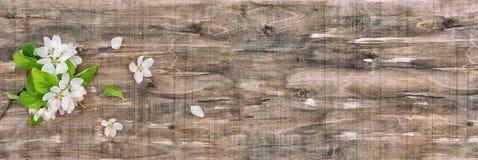 Τα λουλούδια ανθών δέντρων της Apple αναπηδούν το ξύλινο έμβλημα Στοκ Εικόνες