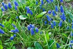 Τα λουλούδια είναι lavender τομέας Στοκ Εικόνες