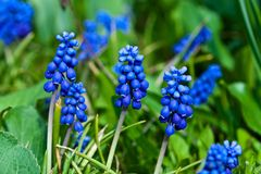 Τα λουλούδια είναι lavender τομέας Στοκ εικόνα με δικαίωμα ελεύθερης χρήσης