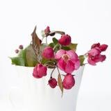 Τα λουλούδια ενός Apple-δέντρου του niedzwetzkyana Dieck Nedzvetsky Malus Στοκ φωτογραφία με δικαίωμα ελεύθερης χρήσης