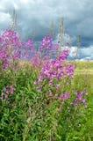 Τα λουλούδια η ηλιόλουστη ημέρα Στοκ εικόνα με δικαίωμα ελεύθερης χρήσης