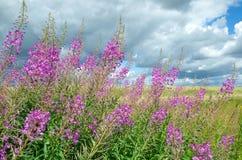 Τα λουλούδια η ηλιόλουστη ημέρα Στοκ Φωτογραφία