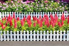 τα λουλούδια καλλιεργούν τροπικός στοκ φωτογραφία
